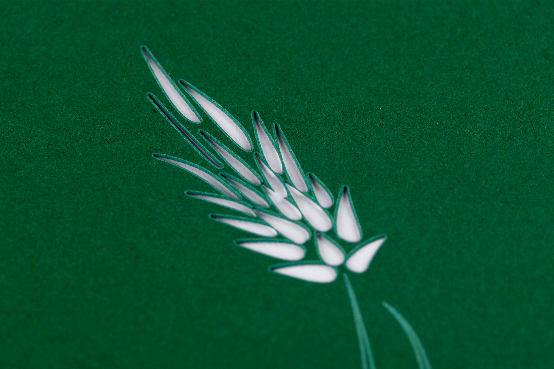 Detail eines Laserschnitts auf hellem Material